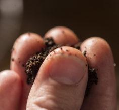 Lege hyller den skandinaviske snusbruken