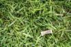 Snus i gress
