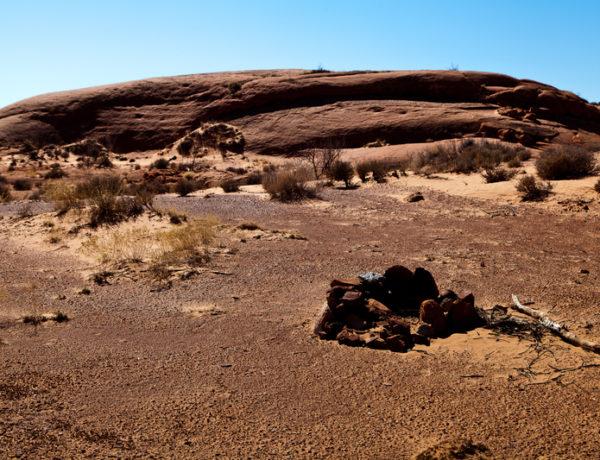12 000 år gamle tobakksfrø funnet i Utah
